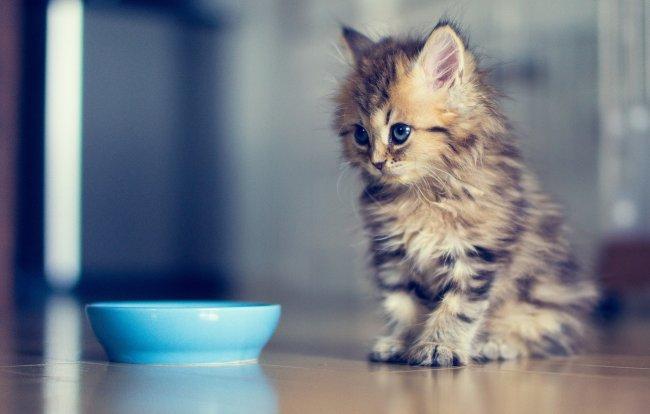 Хоть кошки и предпочитают выбирать